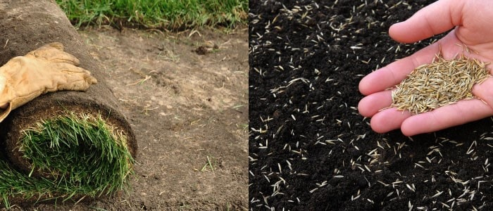 sod and seeds for landscaping surfaces