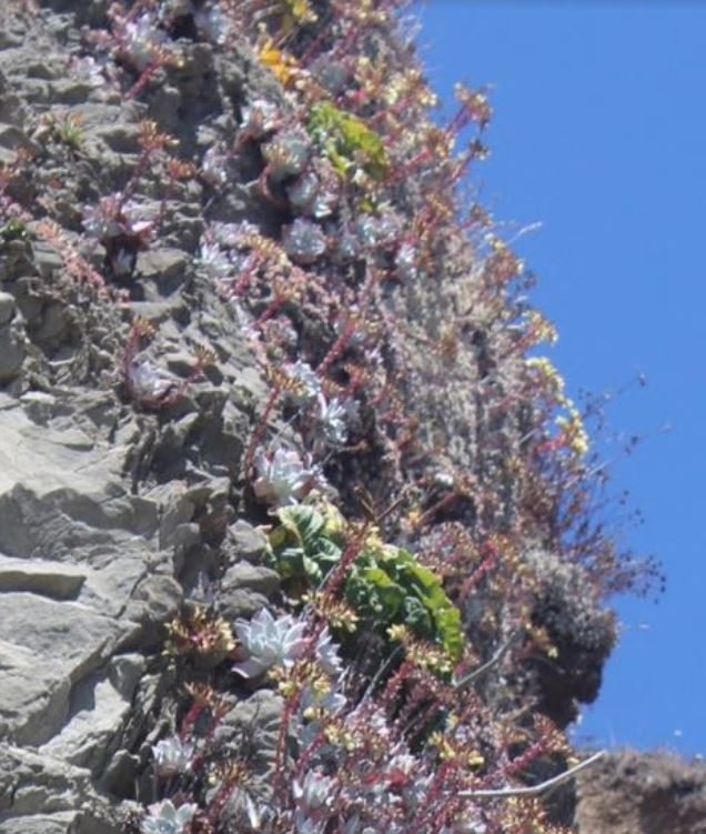 succulents on the side of a rock on the beach