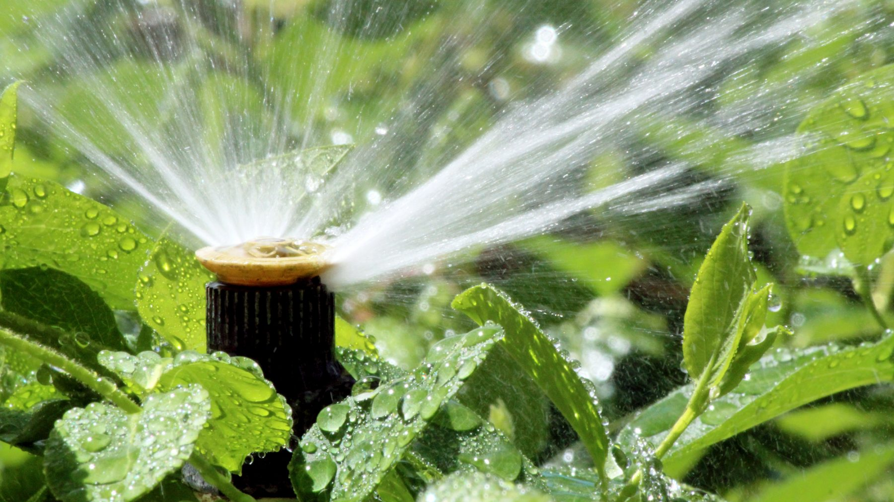 Image for Forest Grove Sprinkler System Repair